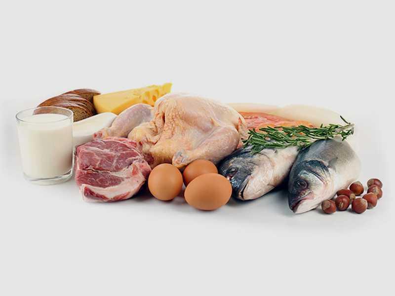 alimentation proteine